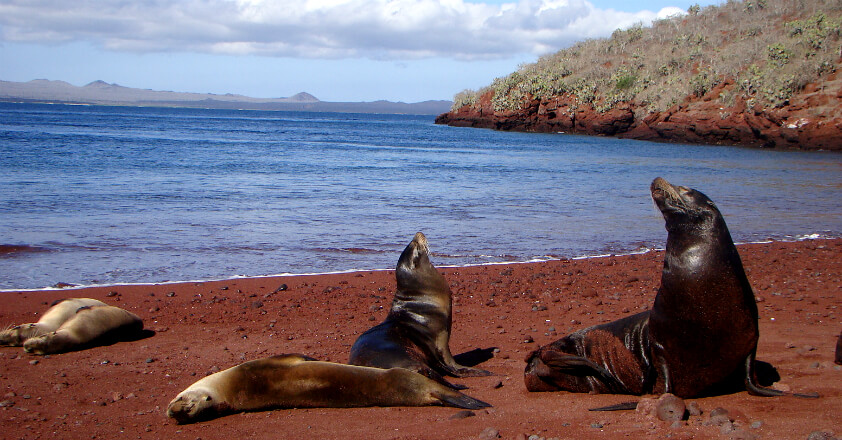 Rabida Galapagos
